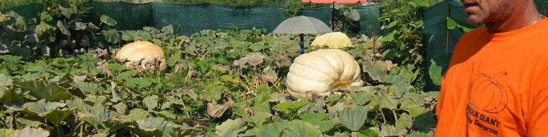 Austrian Giant Pumpkin Growers